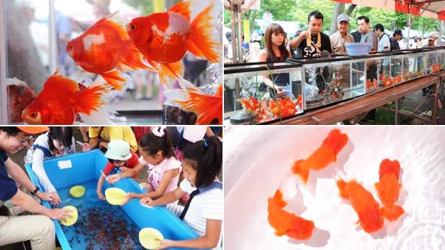 江戸川区特産金魚まつりの画像